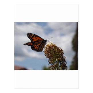 Alimentación magnífica de la mariposa de monarca postal