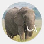 Alimentaciones solitarias del elefante (Loxodonta Pegatina Redonda