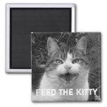 Alimente a gatito el imán malhumorado del gato