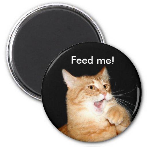 Alimente el imán del gato