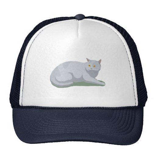Aliste para dejar el gato gorra