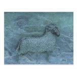 Alivio de las ovejas tarjeta postal