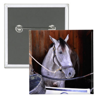 Aljalela - Todd Pletcher Roan Thoroughbred Pinback Button
