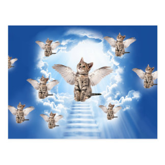 All Cats Go to Heaven Postcard