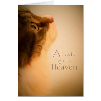 All Cats Go To Heaven Sympathy Card
