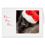 All Dressed for Christmas Greeting Cards