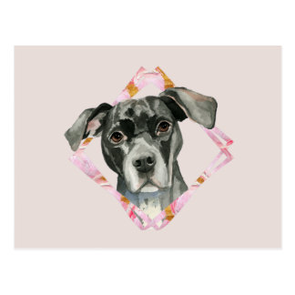"""""""All Ears"""" 2 Pit Bull Dog Watercolor Painting Postcard"""