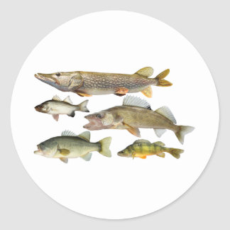 all-Fish Classic Round Sticker