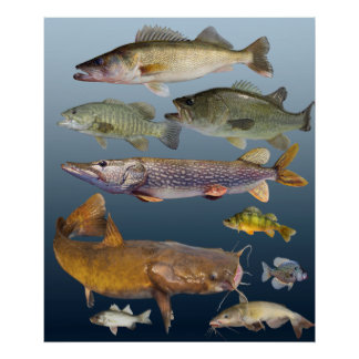 all game fish poster
