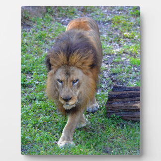 All Hail the King of the Jungle Plaque