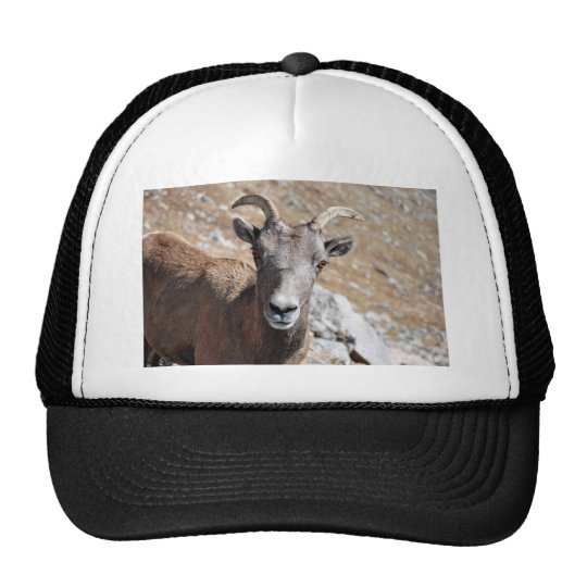 All I Really Need is EWE Trucker Hat