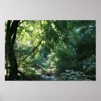 All is Quiet in Shadow Den, Muir Woods Print
