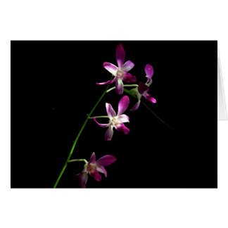 All Occasion Card ~ Orchids ~ Floral Art