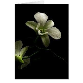 All Occasion Card ~ Orchids ~ Floral Photography Greeting Cards
