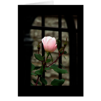 All Occasion Card ~ Roses~ Floral Art Photography Greeting Card