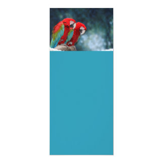 All Occasion Colorful Parrots 4x9.25 Paper Invitation Card