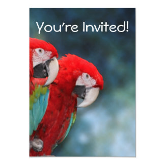 All Occasion Colorful Parrots 5x7 Paper Invitation Card