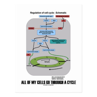 All Of My Cells Go Through A Cycle (Biology) Postcard