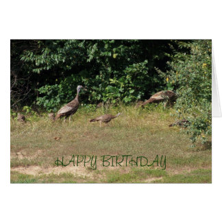 All Of Us Turkeys, Birthday Card