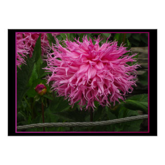 All Pink Flower Poster