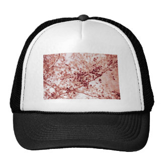 all rosy trucker hat