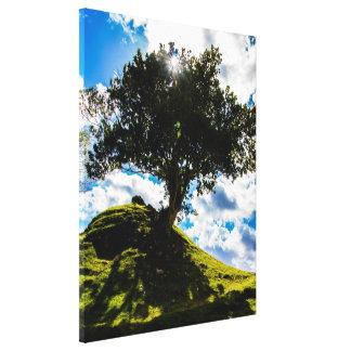 All Spice tree Canvas Print