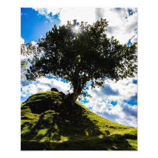 All Spice Tree Print
