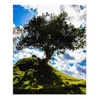 All Spice Tree Print Art Photo