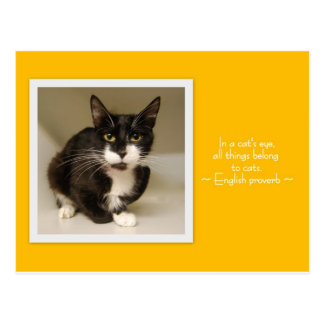 All Things Belong to Cats Postcard