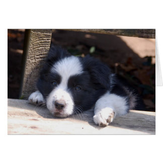 All Tuckered Out Border Collie Puppy Note Card