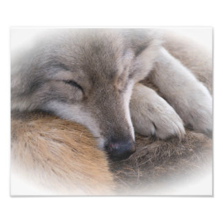 All Tuckered Out Photo Print