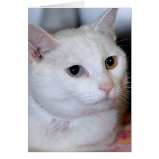 All-White Shorthair Cat Greeting Note Cards