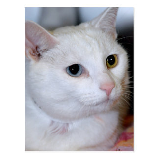 are savannah cats hypoallergenic
