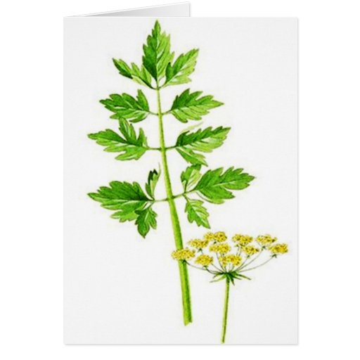 All you need is Lovage Cards