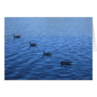 All your ducks in a row greeting card
