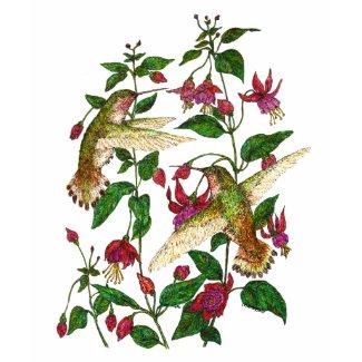 Allan's Hummingbird with Fuschia shirt
