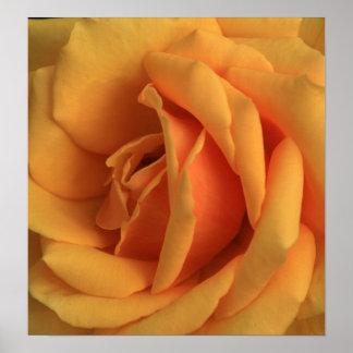 Allan's Yellow Rose Poster