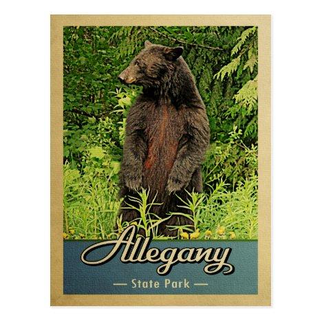 Allegany State Park Vintage Bear Postcard