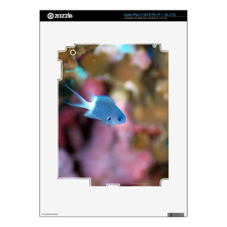 Allen s chromis decal for iPad 3