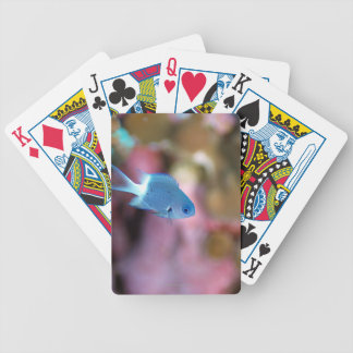 Allen's chromis bicycle playing cards