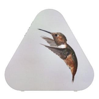 Allen's Hummingbird speaker