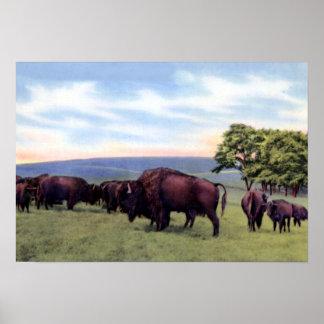 Allentown Pennsylvania Trexler Game Preserve Bison Poster