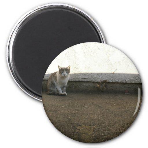 Alley Cat Dusty Days Parking Lot Feline 2 Inch Round Magnet