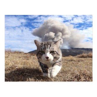 Alley cat niyan good fortune< Activity period > Postcard