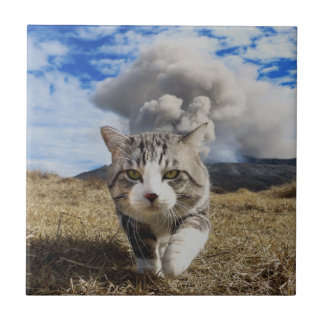 Alley cat niyan good fortune< Activity period > Tile