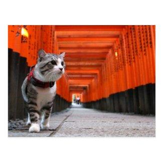 Alley cat niyan good fortune< The Fushimi god of Postcard