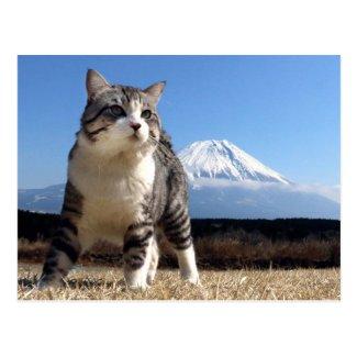 Alley cat niyan good fortune< To be, tsu Japan Postcard