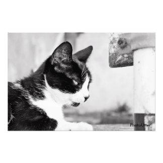 Alley Cat Fotografía