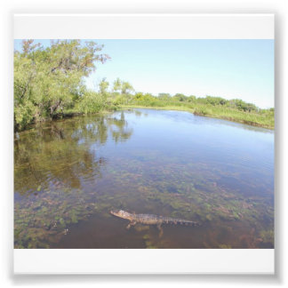 Alligator Alley Photo Print