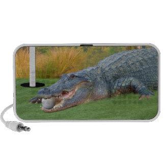 Alligator and Golf Ball Doodle Speaker